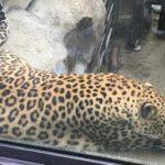 2人目出産後、はじめての動物園は父娘2人で。&娘の成長に母は喜ぶ。