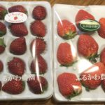 【ふるさと納税】佐賀県小城市のいちごが届いたヨ♪